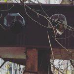 Зимовья котов, небесные метлы и битва за Москву в поезде. О чем писали районные СМИ на неделе