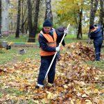 Почему убирают листву вопреки запретам? На вопросы жителей отвечает муниципальный депутат Елена Филина
