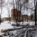 Березовая аллея в Левобережном попала в книгу памяти парков Москвы